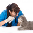 Vet doctor examining pet cat eyes. — Stock Photo #39556887