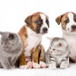 Stock Photo: Group of cats and dogs sitting in front.