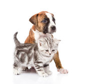 Scottish kitten and puppy looking away. — Stock Photo
