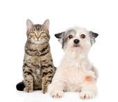 Cat and dog looking at camera together. — Stock Photo