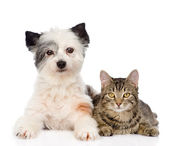 Cat with dog looking at camera together — Stock Photo