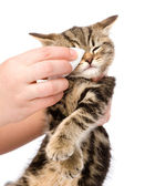 Veterinary surgeon wipes eyes to a cat. — Stock Photo