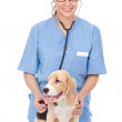 Veterinarian examining a puppy dog. — Stock Photo