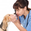Stock Photo: Female professional vet doctor examining pet dog eyes.
