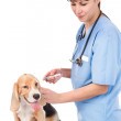Vet and dog - getting a vaccine — Stock Photo