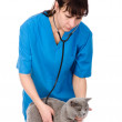 Veterinarian examining a cat — Stock Photo