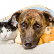 Stock Photo: Sad dog and cat