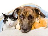 Sad dog and cat — Stock Photo