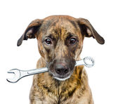 Dog with wrench — Stock Photo