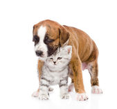 Puppy with scottish kitten — Stock Photo