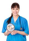 Portrait veterinarian with kitten — Stock Photo
