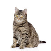 Tabby cat looking away — Stock Photo