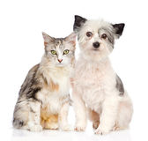 Cat and dog sitting together. — Stock Photo