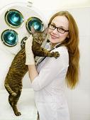 Vrouwelijke dierenarts met cyperse kat in het kantoor dierenarts — Stockfoto