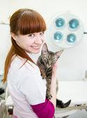 Szczęśliwy, lekarz weterynarii z devon rex kot w biurze kształcenia i szkolenia zawodowego — Zdjęcie stockowe