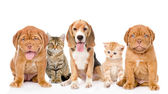 Large group of cats and dogs sitting in front. — Stock Photo
