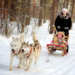 Woman and little girl on a sleigh ride with siberian husky — Stock Photo #43080795