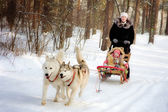 Woman and little girl on a sleigh ride with siberian husky — Stock Photo