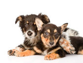 Two embracing a puppy looking at camera — Stock Photo