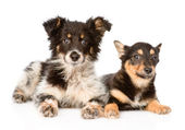 Two lying puppy looking at camera — Stock Photo