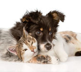 Close-up dog with cat together — Stock Photo