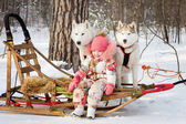Little girl with husky dogs — Stock Photo