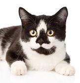 Closeup muzzle cat — Stock Photo