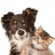 Closeup puppy dog and kitten together — Stock Photo #45842987