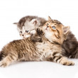 Fight between two british kittens — Stock Photo #45843109