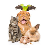 Group of pets together in front — Stock Photo