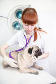 A dog at animal clinic — Foto de Stock