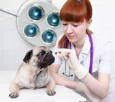 Female vet giving a pill to a obedient dog — Photo