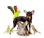 Group of exotic pets. — 图库照片