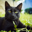 Black cat — Stockfoto