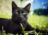 Black cat — Stock Photo