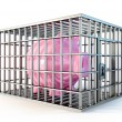 Piggy in cage - Stock Photo