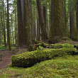 Stock Photo: Forests of Pacific Northwest