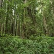 Ferns Forest — Stock Photo #17159151