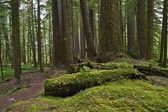 Forests of Pacific Northwest — Stock Photo