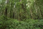 Ferns Forest — Stock Photo