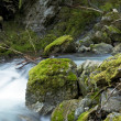 Cascades Mountains Creek — Stock Photo