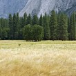 Yosemite Valley Wiese — Stockfoto