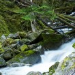 Scenic Montana Mossy Creek — Stock Photo #17165969