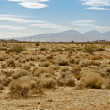 Stock Photo: Mojave Desert US14