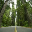Stock Photo: Redwood State Park