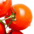Tomatoes Freshness — Stock Photo