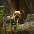 Dog in Forest — Stockfoto