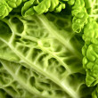 Fresh Raw Cabbage - Stock Photo