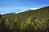 National Forest Colorado — Stock Photo