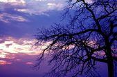 Creepy Sunset Tree — Stock Photo